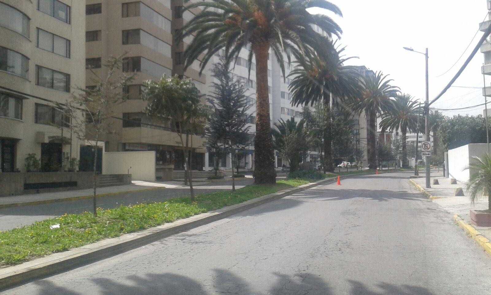 palmeras diego de almagro